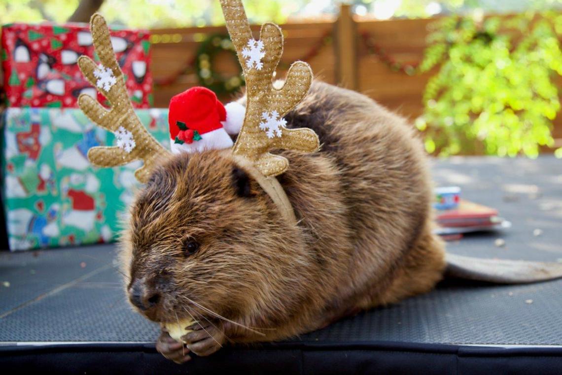 Christmas at the Zoo