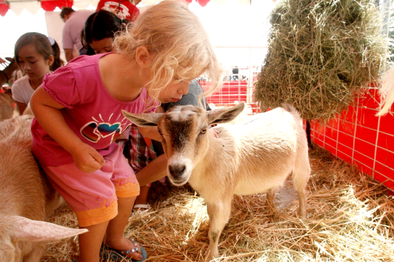 Petting Zoo at Americas Family Pet Expo