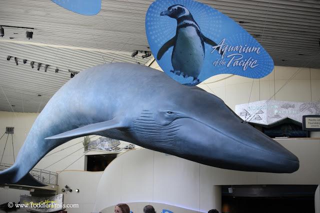 Aquarium of The Pacific, Long Beach Aquarium, Long Beach