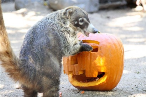 Halloween at the Zoo 2
