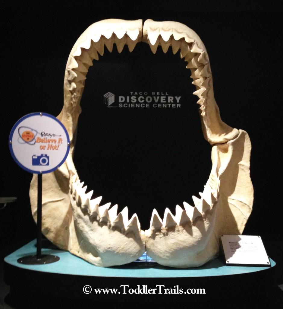 DSC Science Ripleys Jaws