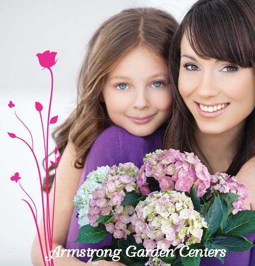 Mother-and-Daughter-hydrangeas