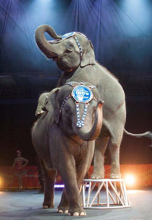 Elephants Ringling Bros. and Barnum & Bailey presents LEGENDS - Credit Feld Entertainment