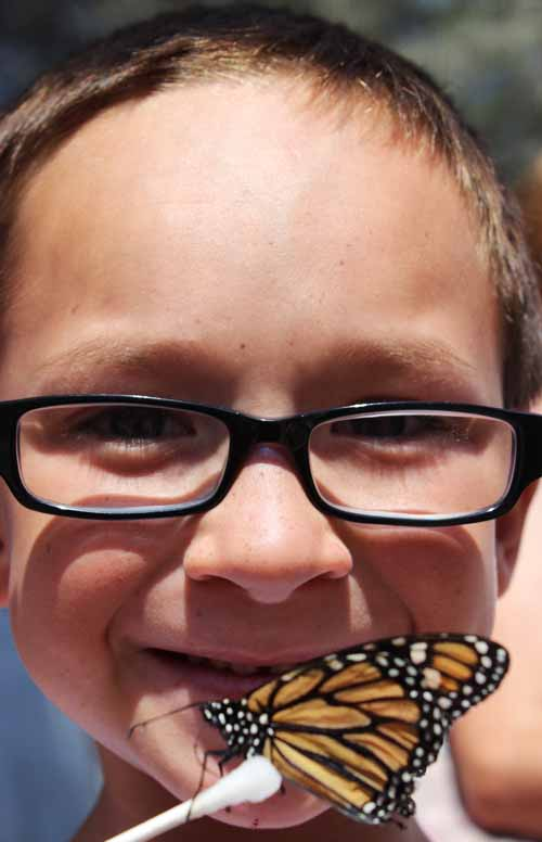 Fair Butterfly