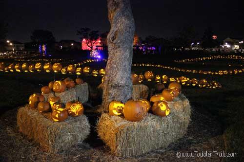 Pumpkins-a-glow