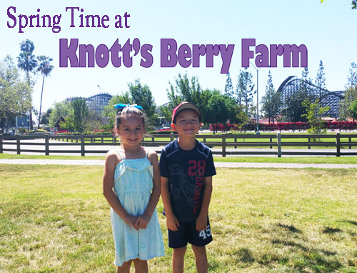 Knott's Berry Farm, Knotts Spring, Boysenberry Festival