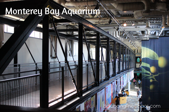 Monterey Bay Aquarium, Monterey California