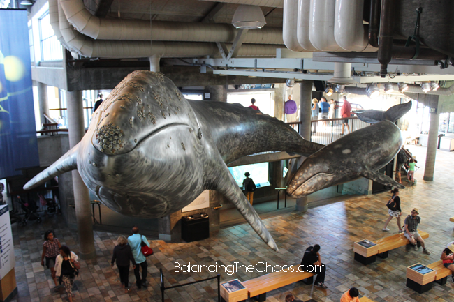Monterey Bay Aquarium Artwork Whales