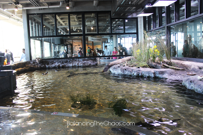 Monterey Bay Aquarium, Bat Ray Exhibits