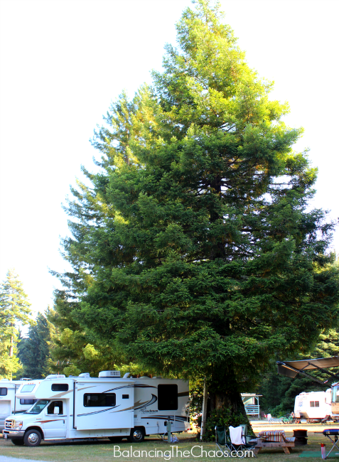 Our Mystic Forest RV Site