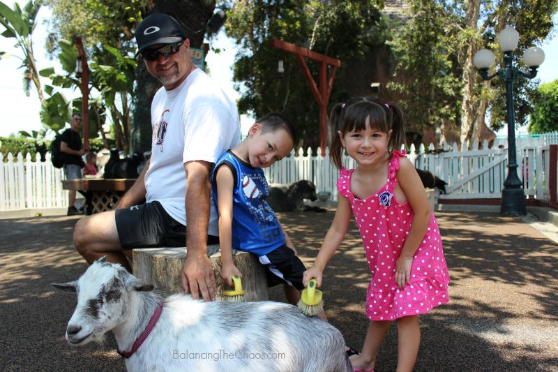 Adventure City Theme Park Petting Zoo