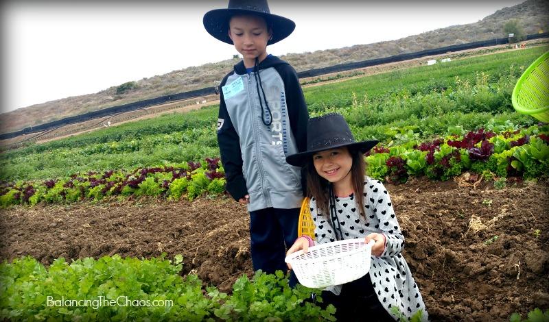 Tanaka Farms Cookout Tour Cilantro