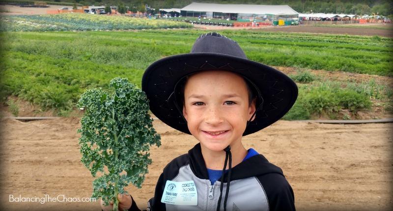 Tanaka Farms Curly Kale Cookout Tour
