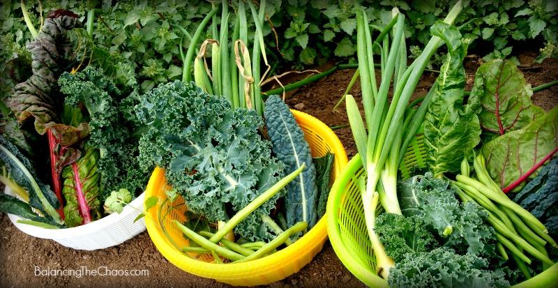 Tanaka Farms Fresh vegetables