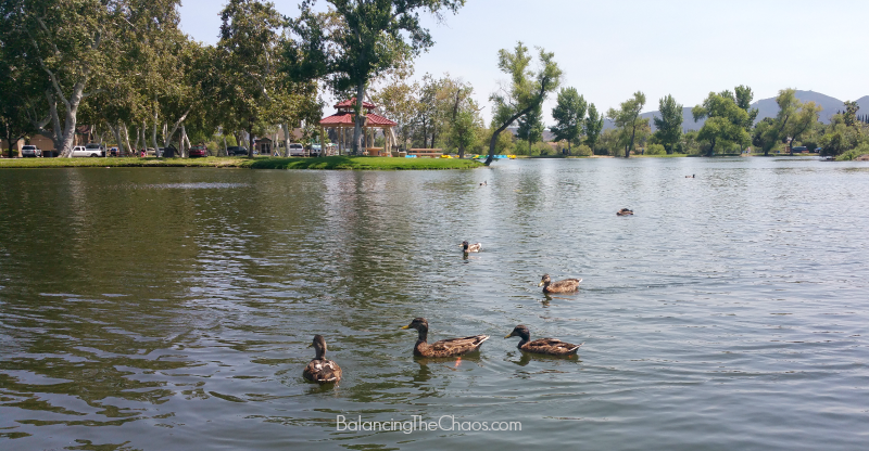 Wild Life at Santee Lakes