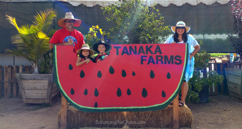 Tanaka Farms Melon Tours