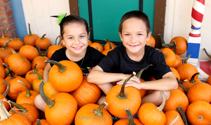 Hundreds of Pumpkins at Irvine Park Railroad Pumpkin Patch