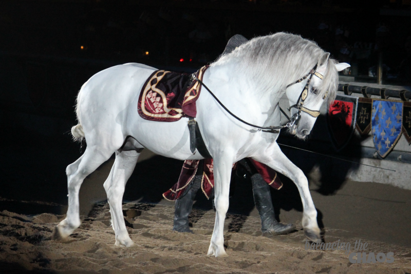 Horses at Medieval Times