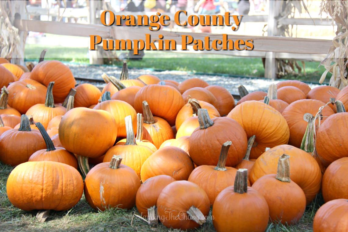 Orange County Pumpkin Patches