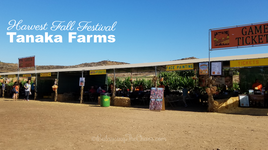 Harvest Fall Festival at Tanaka Farms