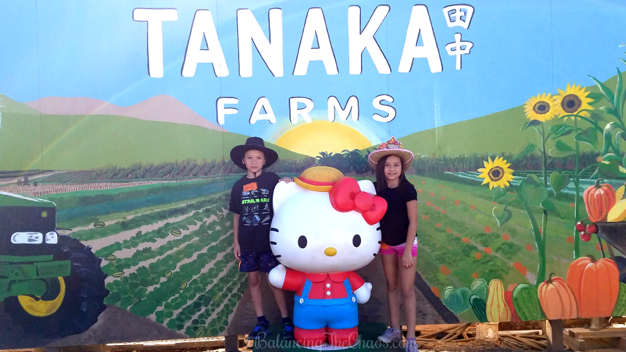Hello Kitty at Tanaka Farms