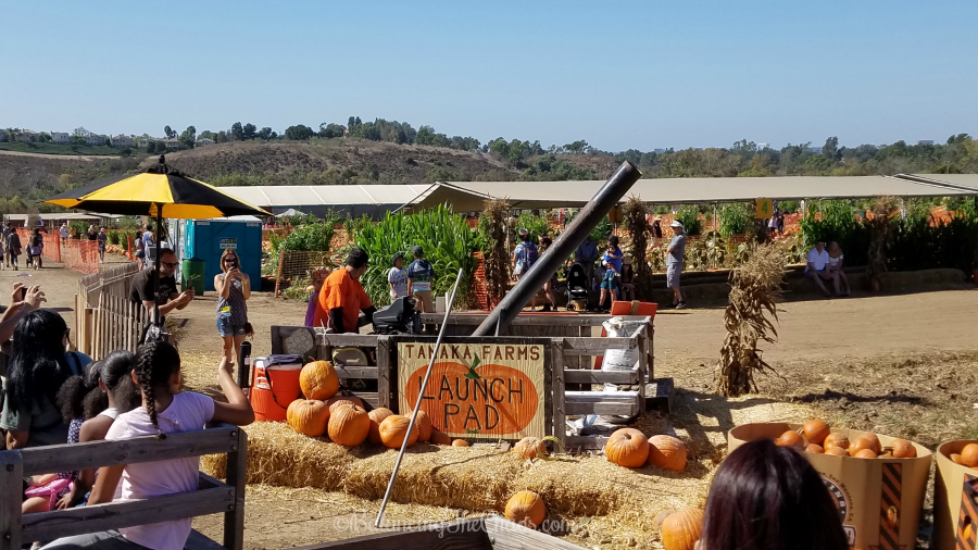 Tanaka Farms Launch Pad Pumpkin Launch