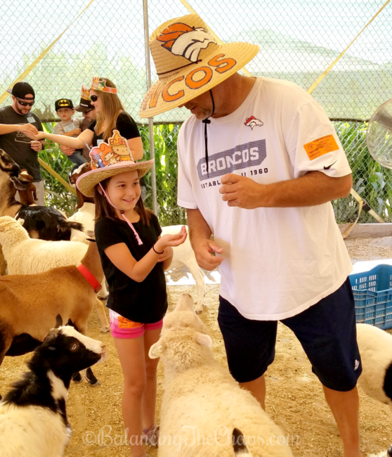 Tanaka Farms Petting Zoo