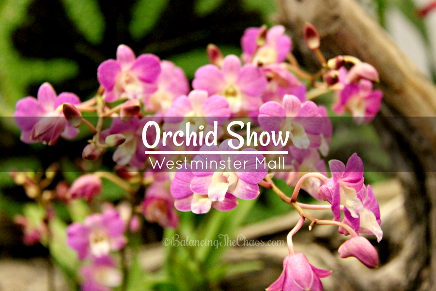 Orchid Show at Westminster Mall