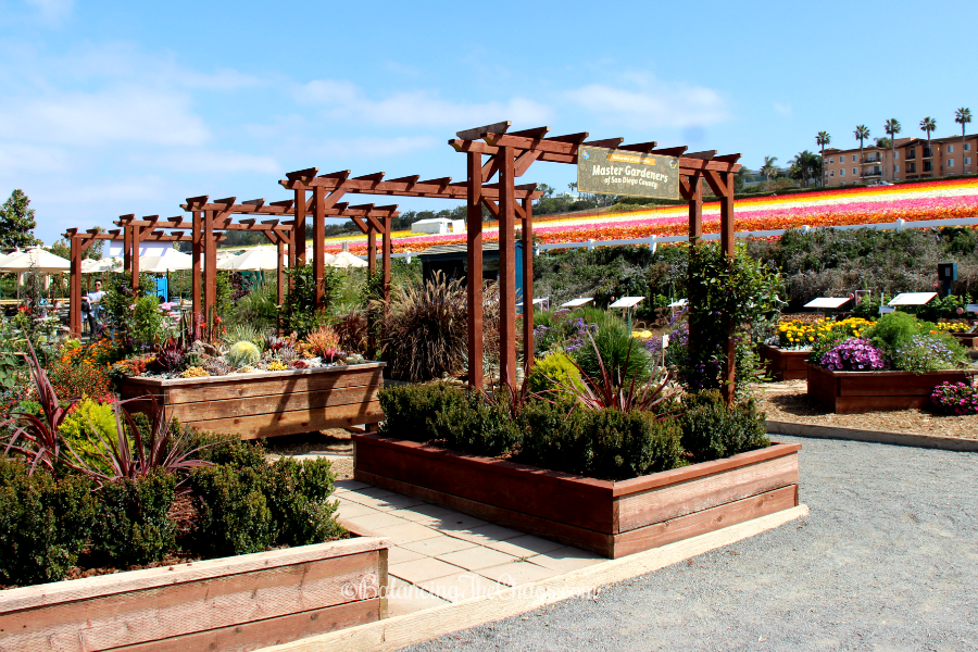 San Diego Master Gardeners display at The Flower Fields in Carlsbad