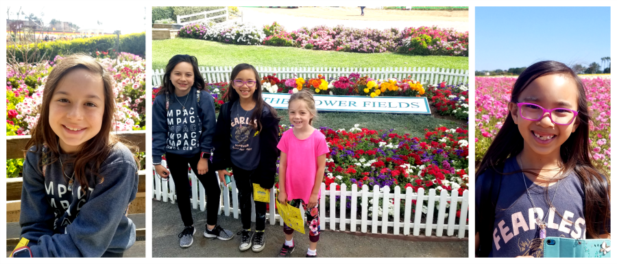 visiting the flower fields at Carlsbad Ranch