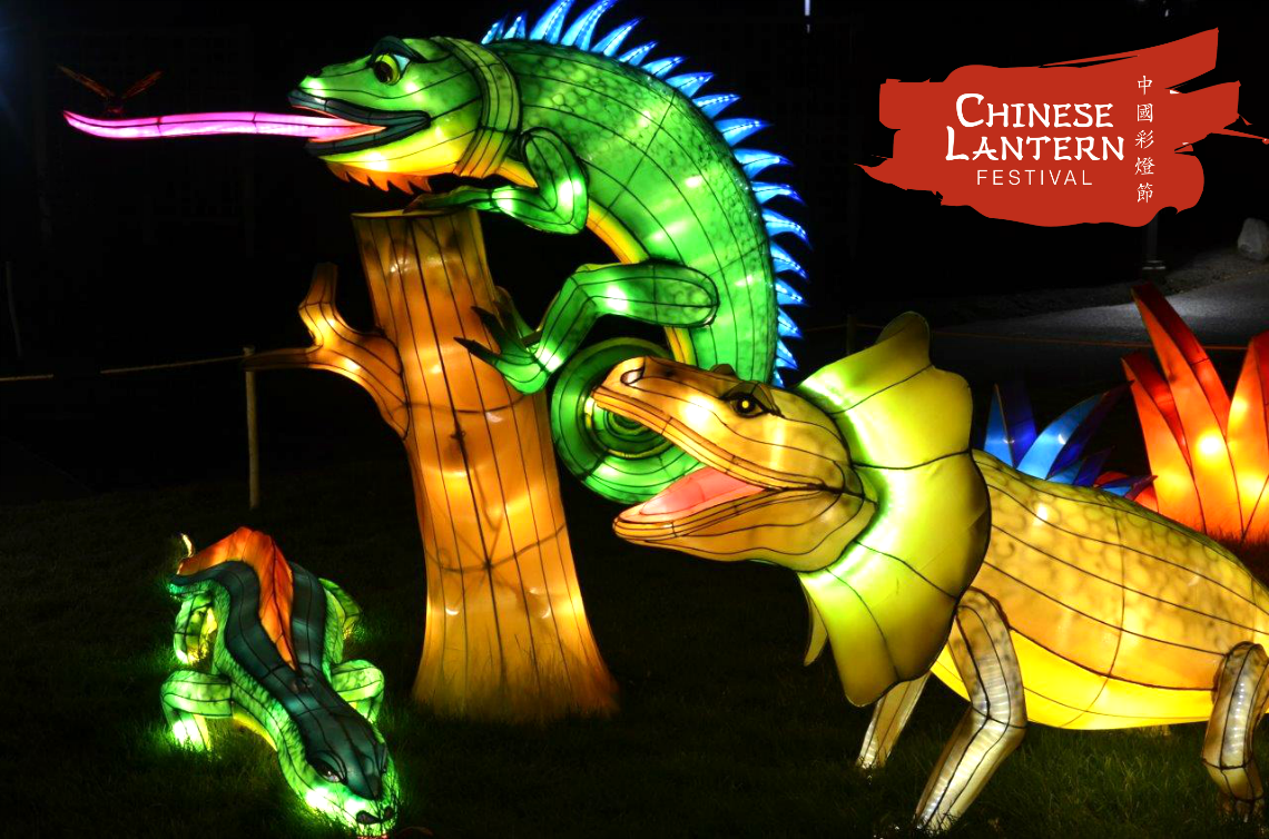 Chinese Lantern Festival Lizards