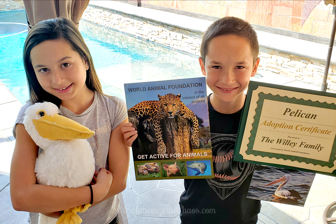 Adopting a pelican on behalf of Storm Boy and The World Animal Foundation