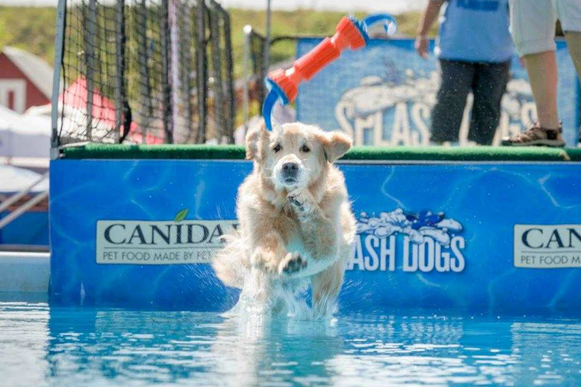 Pet-expo-Dog-in-Water