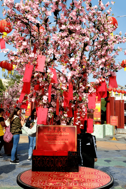 Plum Blossom Wishing Trees at Universal Studios Hollywood during Lunar New Year